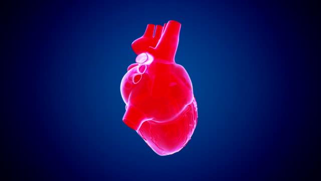 vídeos de stock e filmes b-roll de rotating heart red - coração humano