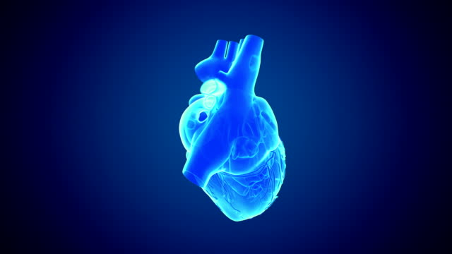 Rotating heart Loop able rotating heart animation pulse trace stock videos & royalty-free footage