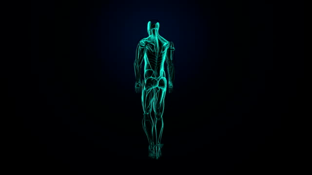 Rotating Human muscle system, Blue  X-ray light. video