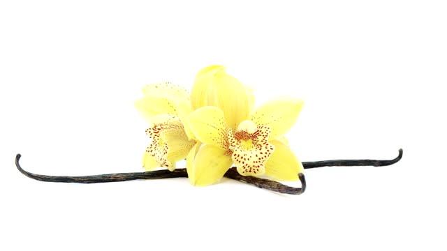 vidéos et rushes de tournant la boucle d'orchidées et de vanille - vanille