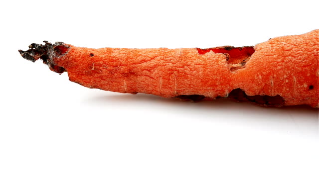 rotating of a rotten carrot bited by insect video