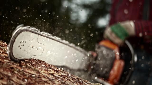 slo mo ld rotating sawchain cutting into a tree - motosega video stock e b–roll