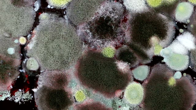 Rotating shot of mold on food video