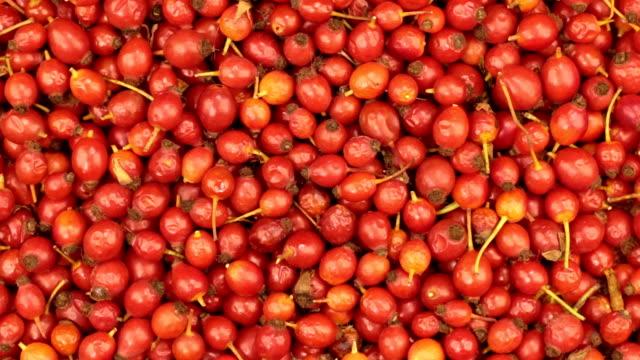 新鮮な収穫ローズヒップの果実の回転 - イヌバラ点の映像素材/bロール