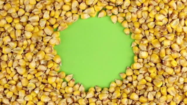 Rotation of the corn grains lying on a green screen, chroma key. video