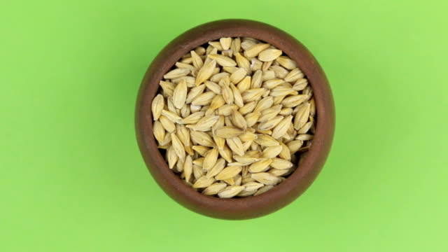 Rotation of the grain of barley in a pot isolated on green screen. video