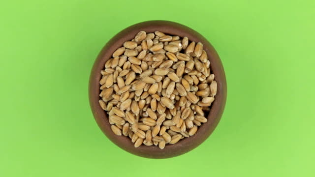 Rotation of the grain of wheat in a pot isolated on green screen. video