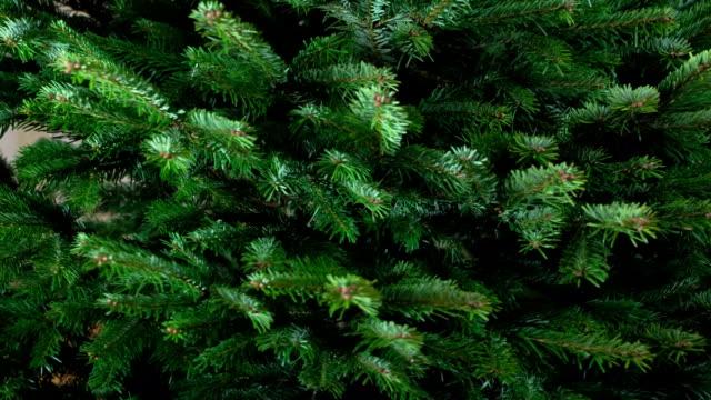 Rotation of the Green Christmas Tree