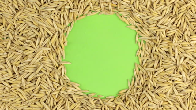 Rotation of the oat grains lying on a green screen, chroma key. video
