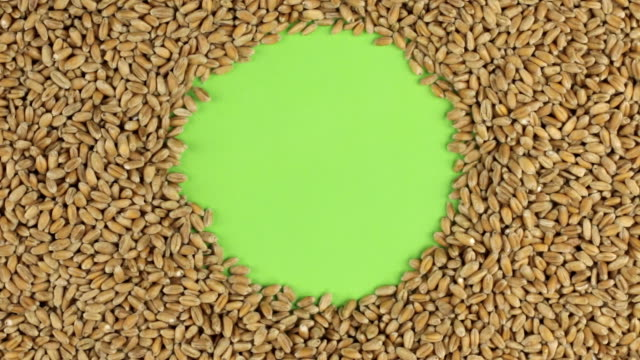 Rotation of the wheat grains lying on a green screen, chroma key. video
