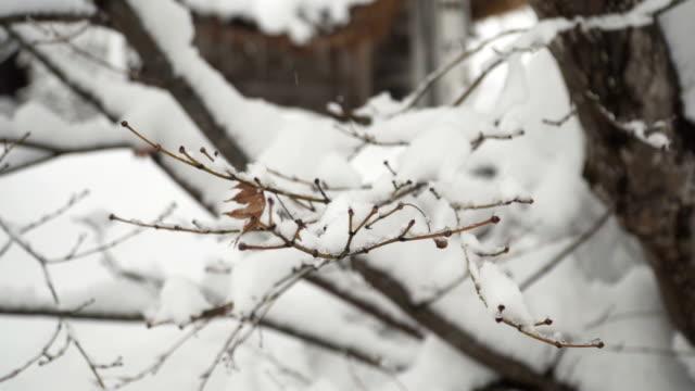 回転の間の木の枝が雪で覆われて ビデオ