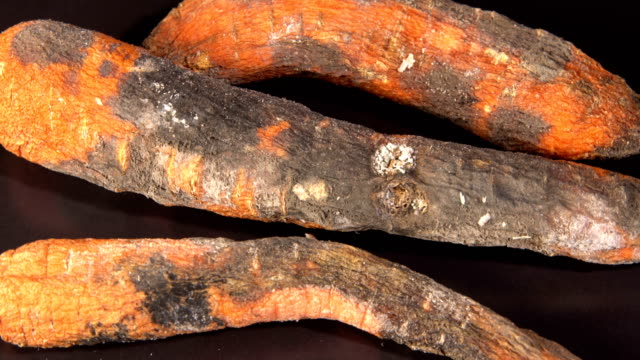 rotten carrot on a black background - derma video stock e b–roll