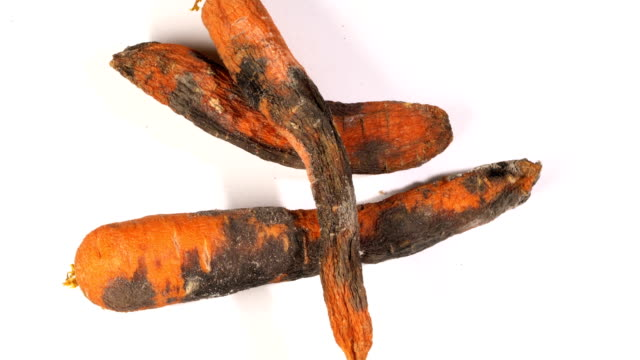 rotten carrot on a white background - derma video stock e b–roll