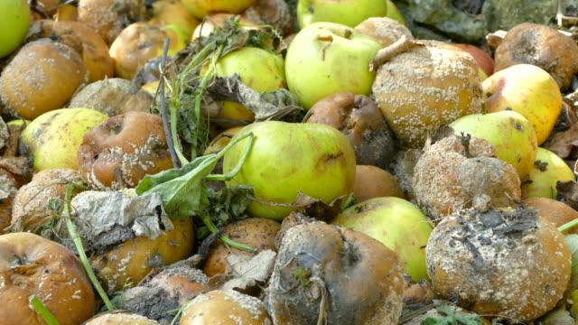 verfault äpfel - verfault stock-videos und b-roll-filmmaterial