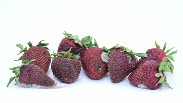 verfault erdbeeren - verfault stock-videos und b-roll-filmmaterial