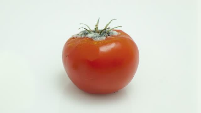 verfault tomaten - verfault stock-videos und b-roll-filmmaterial