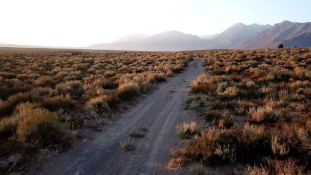 rough dirt road under soft morning light in california - дикая местность стоковые видео и кадры b-roll