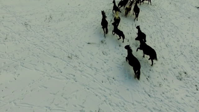 rounding up horses video
