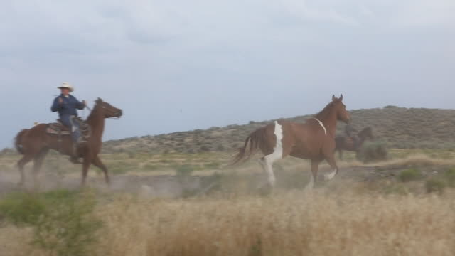 roundup: taming the herd - mustang video stock e b–roll