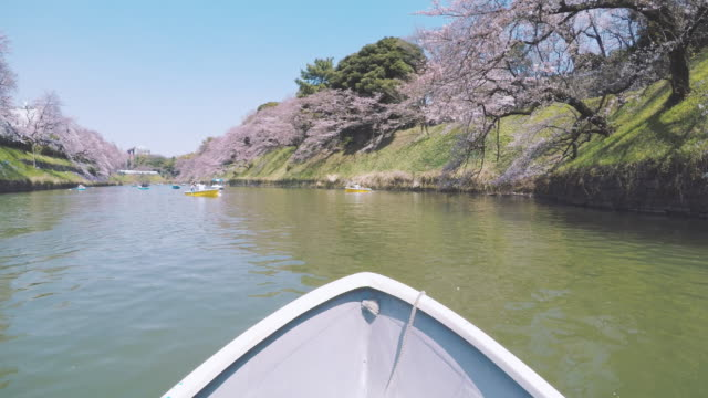 Rowboat on lake with Cherry Blossom video
