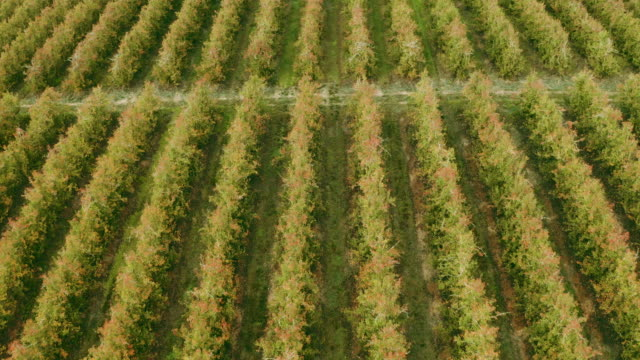 Rows and rows of earthly goodness 4k drone footage of rows of plants on a farm western cape province stock videos & royalty-free footage