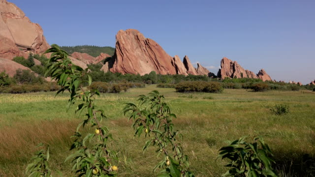 Roxborough State Park red rocks wild plum tree Fountain Trail Colorado Rocky Mountains