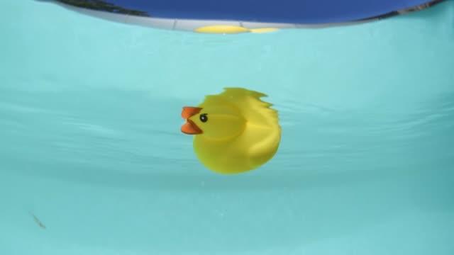 vídeos de stock e filmes b-roll de rubber ducky in the pool - brinquedos na piscina