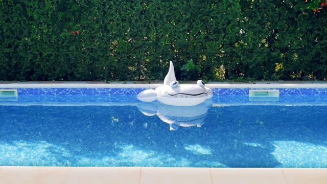 gummiringen - haj i poolen - inflatable ring bildbanksvideor och videomaterial från bakom kulisserna