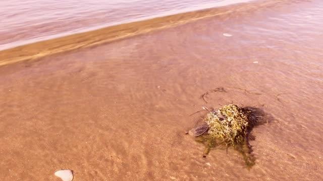 sahilde berbatım. - start stok videoları ve detay görüntü çekimi