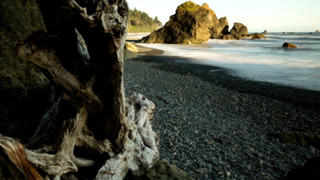 Ruby Beach Driftwood Panning Time-lapse video