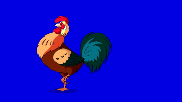 Rufous Rooster Walks. Classic handmade Animation Isolated on Blue Screen video
