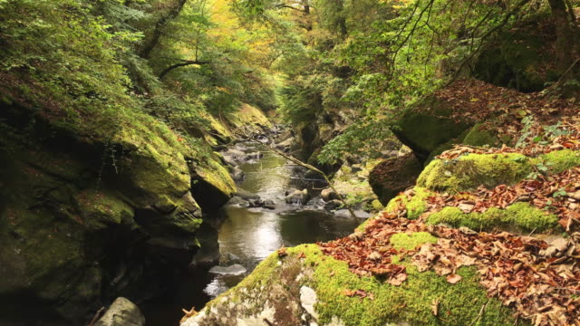 Rugged Wild Stream In A Forgotten Part Of North Wales video