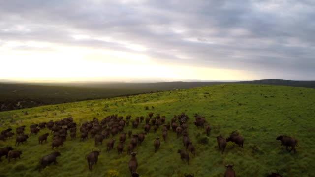 Running across the plain at dusk video