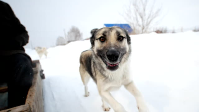 Running dog next to the snowmobile in a snowy village