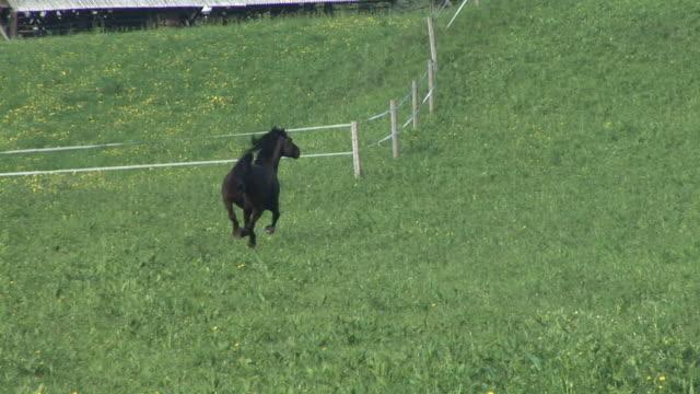 hd: un cavallo da corsa - stallone video stock e b–roll