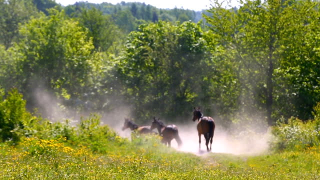 Running horses on the green meadow in summer Horse, gallop, herd, meadow, spring, pasture, animal animal markings stock videos & royalty-free footage