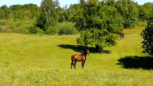 stockvideo's en b-roll-footage met de groene weide paarden waarop in de zomer - vachtpatroon