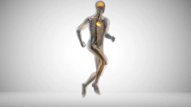 Running in x-rays Running man's muscle activity animation in x-ray style limb body part stock videos & royalty-free footage