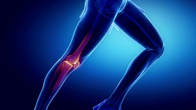 Running man focused on knee bones 3D runner bones anatomy concept knee stock videos & royalty-free footage