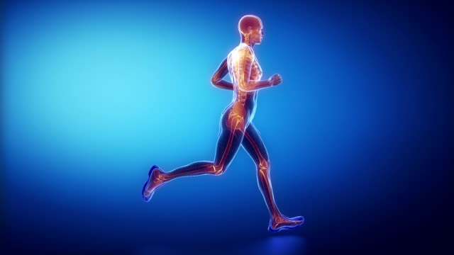 vídeos y material grabado en eventos de stock de hombre corriendo esqueleto exploración - columna vertebral humana