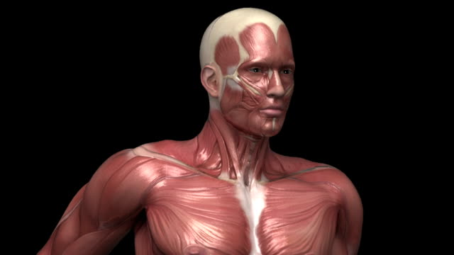 Running muscular man with visible muscles front view Healthy lifestyle concept in 3D animal skeleton stock videos & royalty-free footage