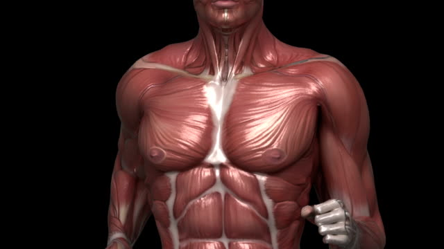 Running muscular man with visible muscles front view video