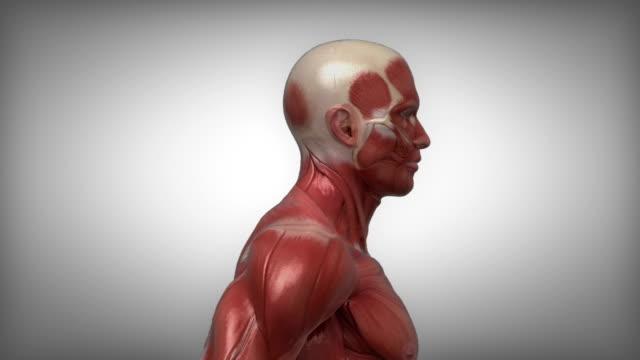 실행 중인 근육질의 남자 보이는 근육을 루프 - 근육질 체격 스톡 비디오 및 b-롤 화면