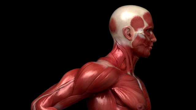 Running muscular man with visible muscles in loop video