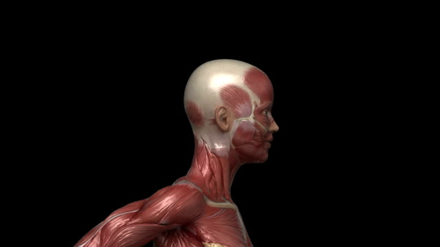 ランニング筋肉の女性に見える筋肉にループ左の眺め - 人の筋肉点の映像素材/bロール