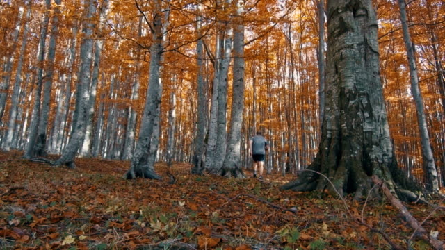 running scared in the autumn forest video