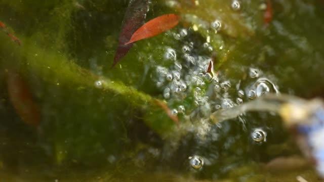 パイプから出てくる水を実行しています。マウンテン スプリング - 湧水点の映像素材/bロール
