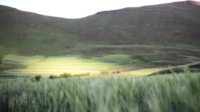 Rural African huts and farm video
