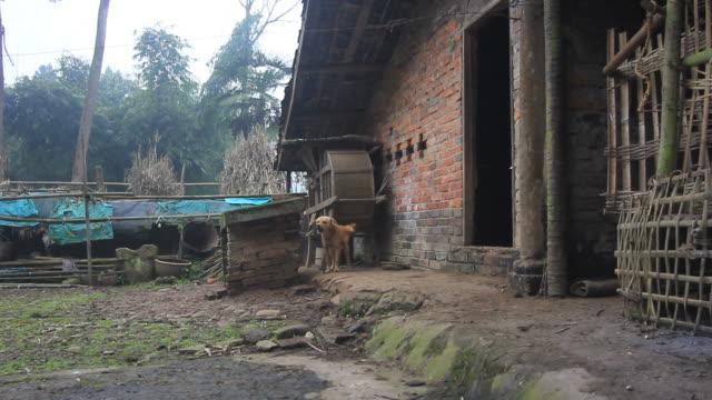 rurali cinesi cani abbaiare - cane addestrato video stock e b–roll