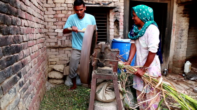 Rural family cutting silage together using chaff cutter at home manually
